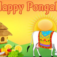 Pongal festival: A festival of thanksgiving